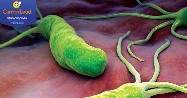 Vi khuẩn HP là nguyên nhân chính gây viêm loét dạ dày